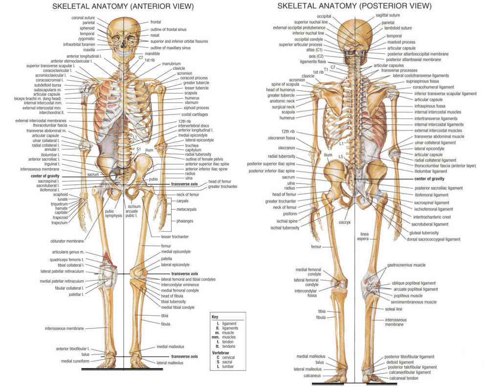 The Best Human Anatomy Course Roste Bosks